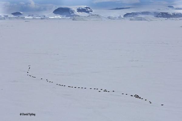 penguines 2