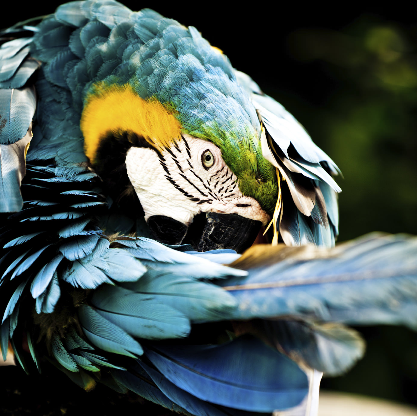 These 10 Exotic Bird Photos will Brighten Your Day and ...