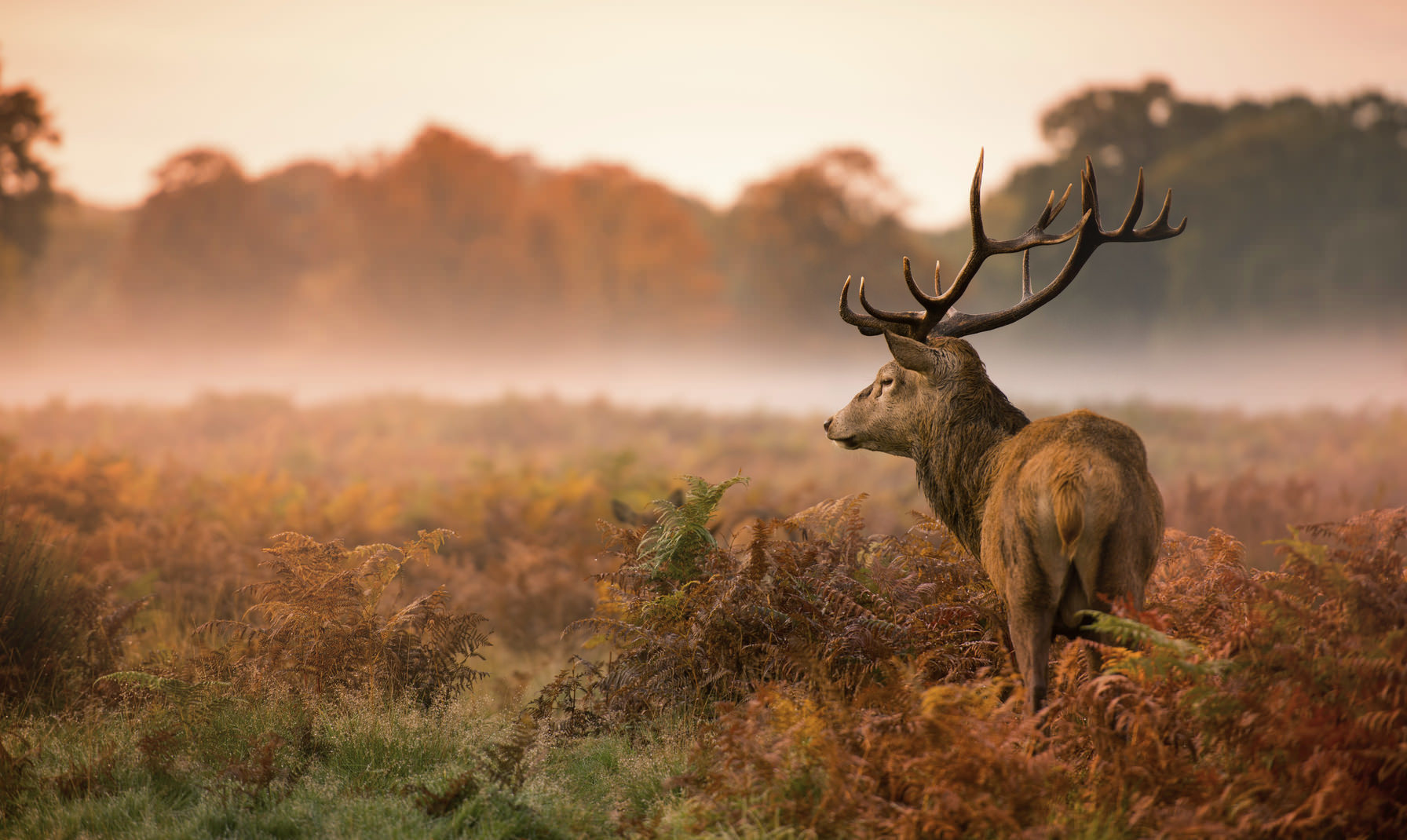 10 Essential Wildlife Photography Tips
