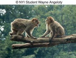 © NYIP Student Wayne Angeloty