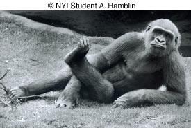 © NYIP Student A. Hamblin