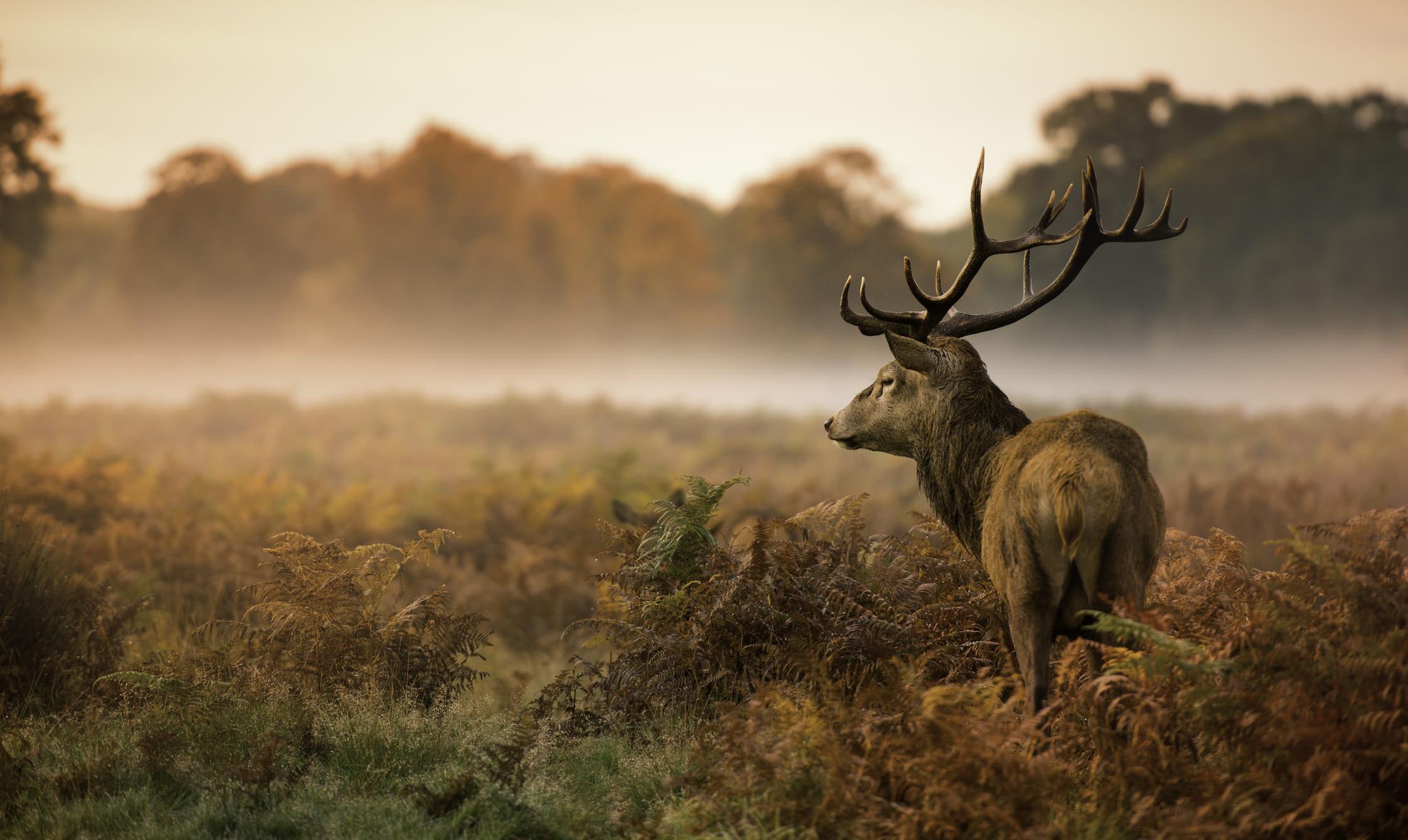 Beginner Wildlife Photography Tip: Basic Camera Settings