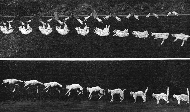 Falling cat 1894