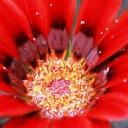 My Flower Pics