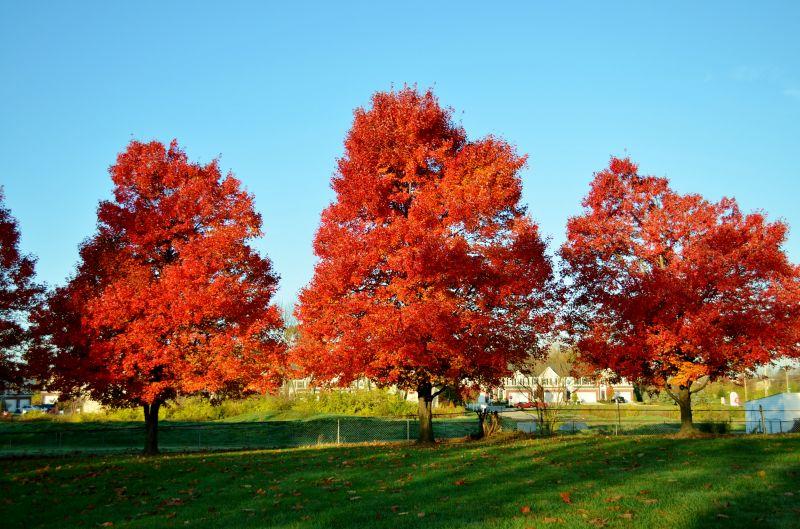 Fall Day November 8, 2011
