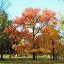 fall2011-11-08 033