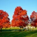 fall2011-11-08 001
