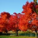 fall2011-11-08 005