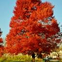 fall2011-11-08 002