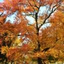 fall2011-11-08 032