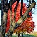 fall2011-11-08 016