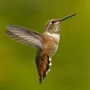 Birds's Photos