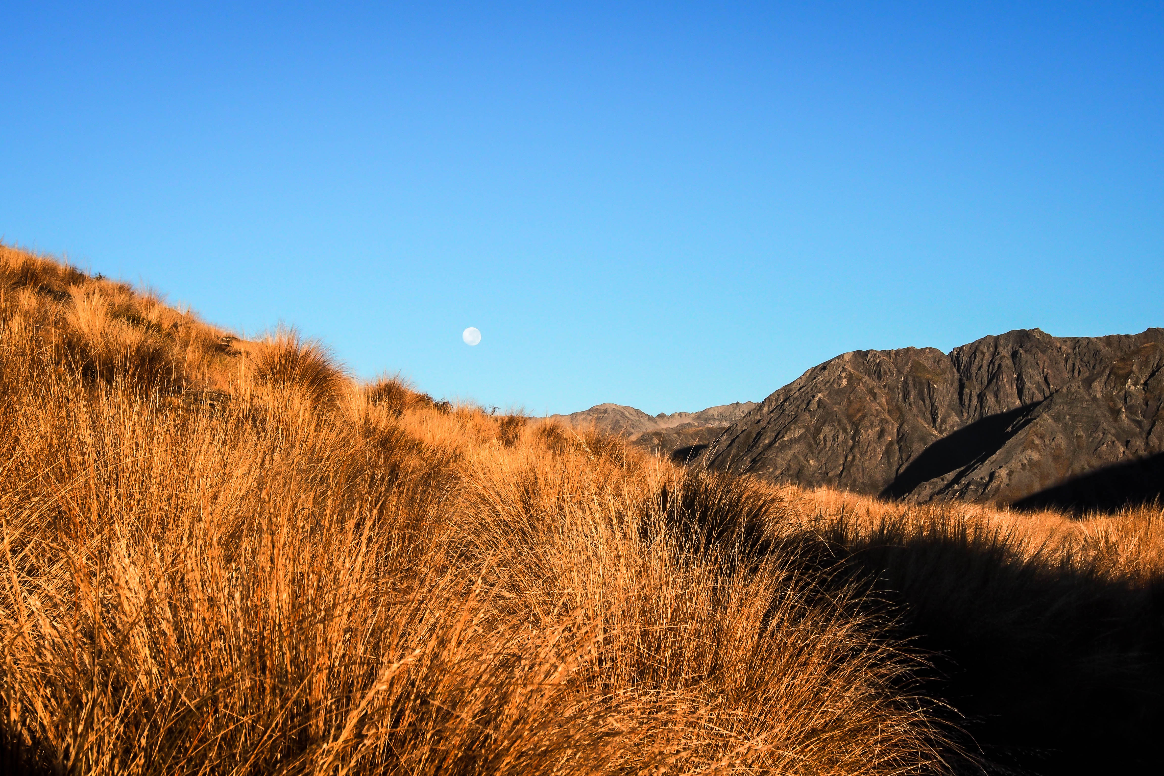 Golden Grasses Under The Moon