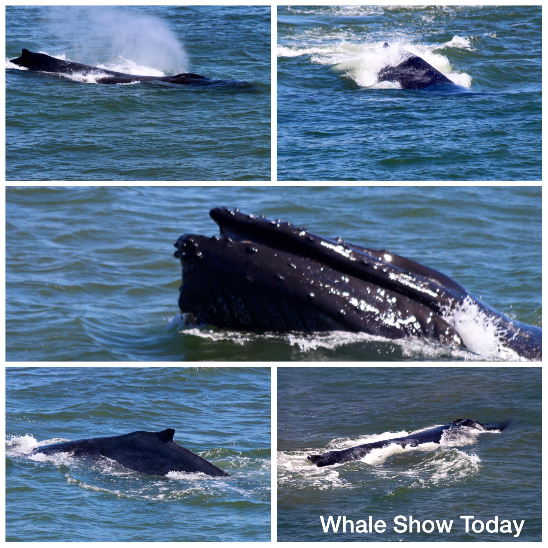 Whales of Maui 2016