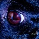 Skippy's eyeball
