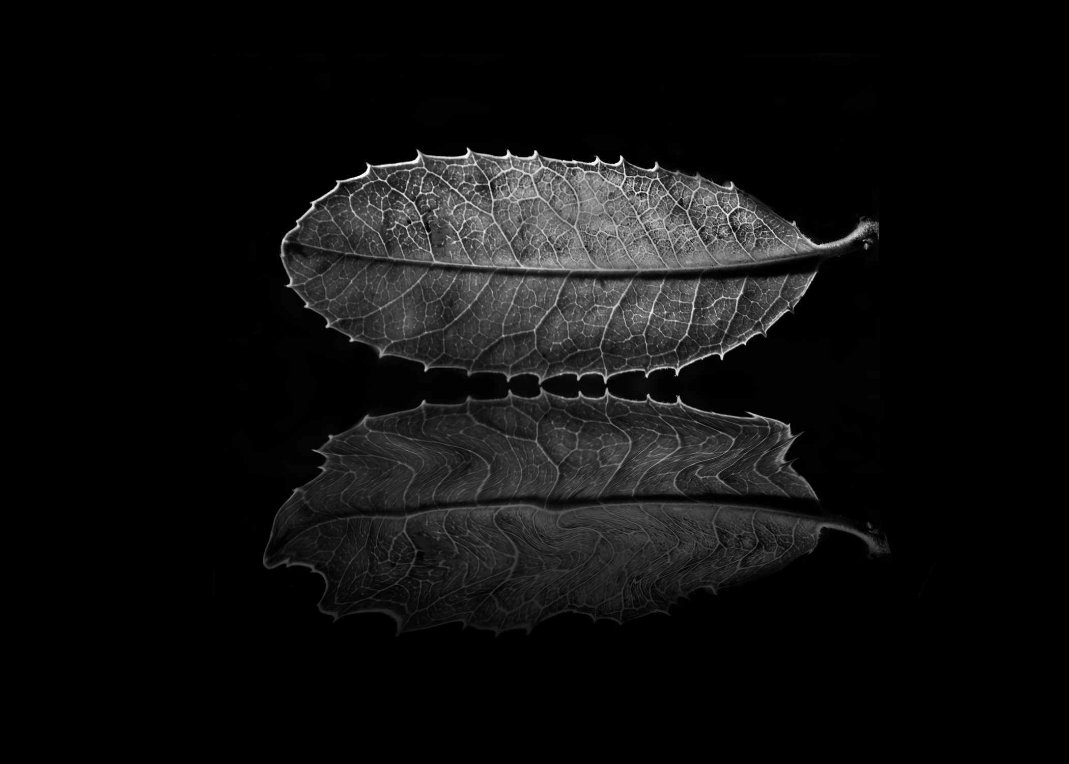 Leaf Reflection