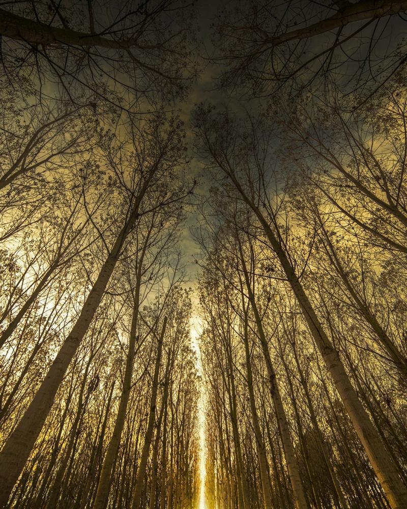 New light in the poplar