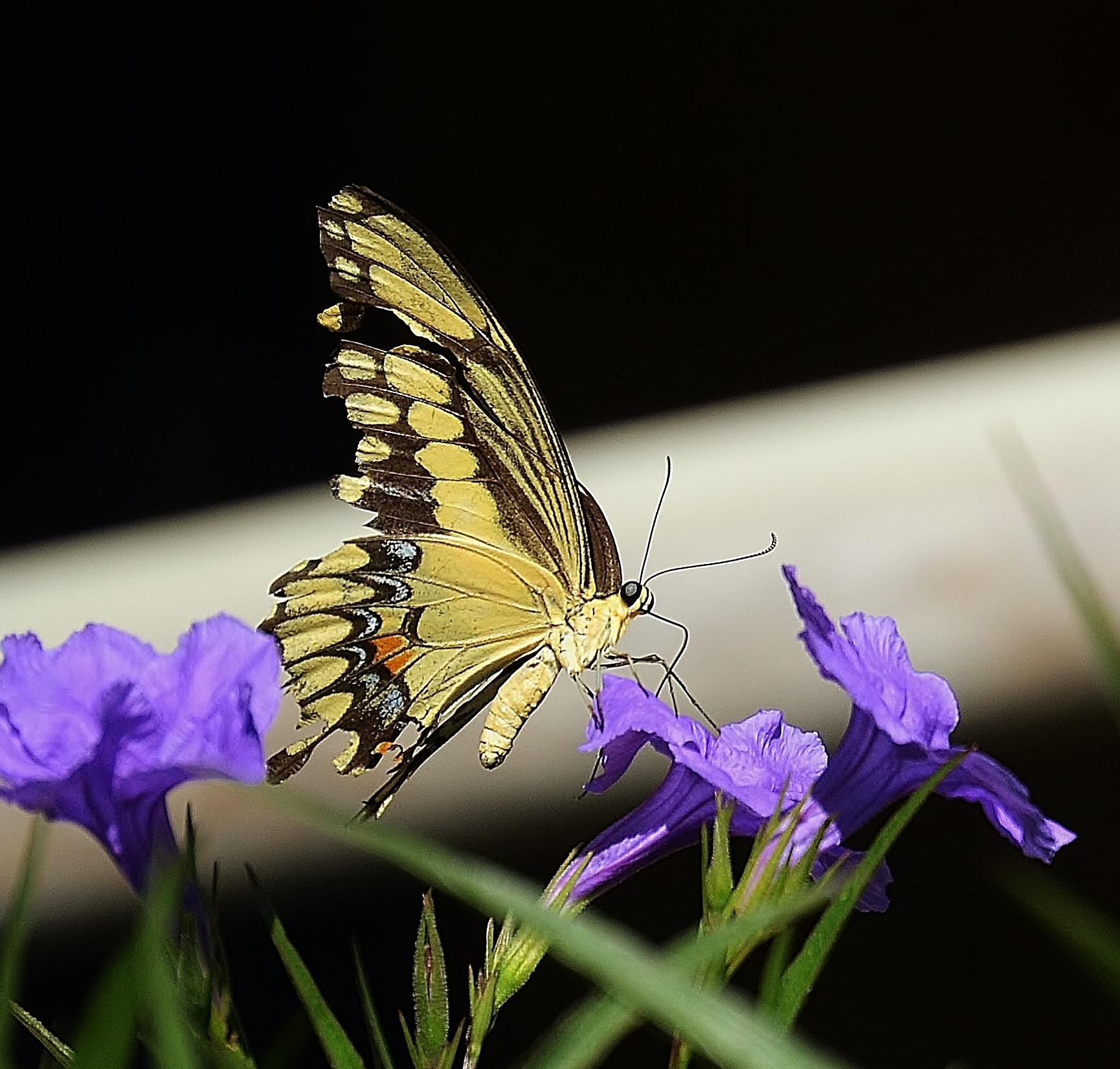 Getting Nectar