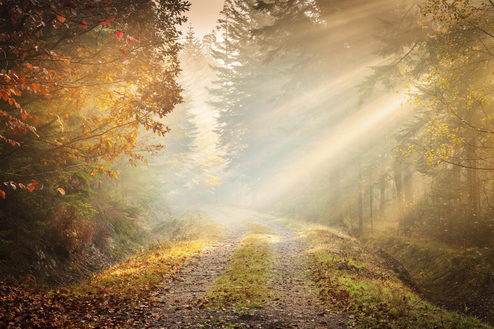 Autumn Fog - Fairytale Road winding through the Forest