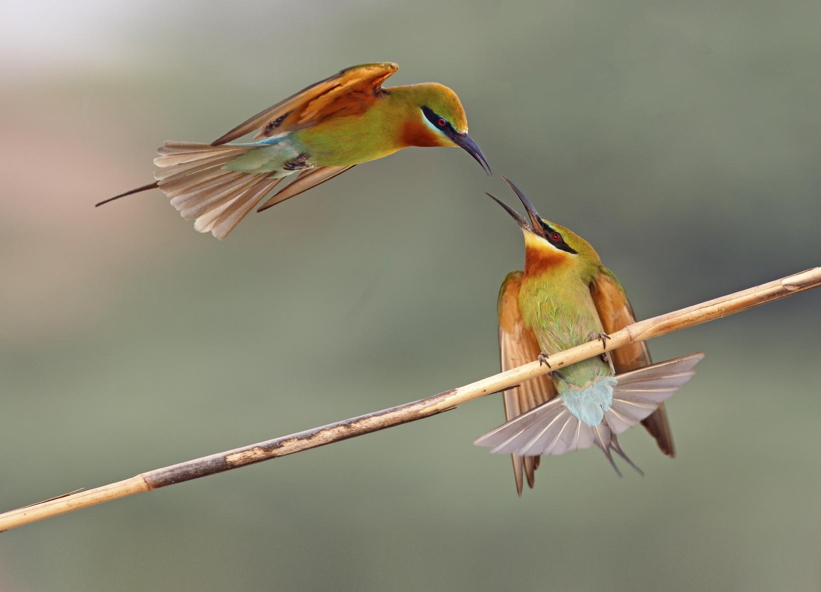 Mid Air Disagreement