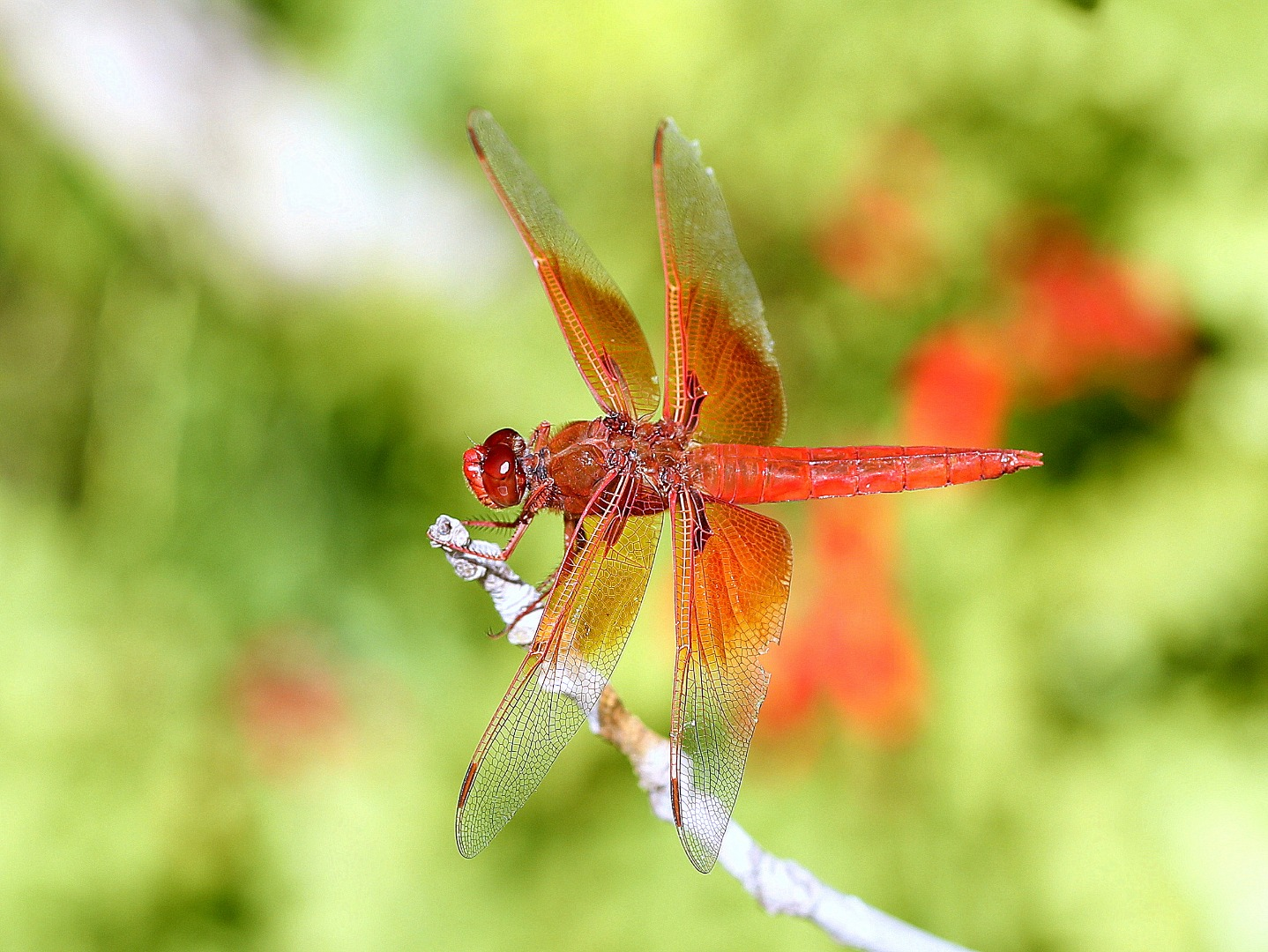 Dragonfly - Photography Forum