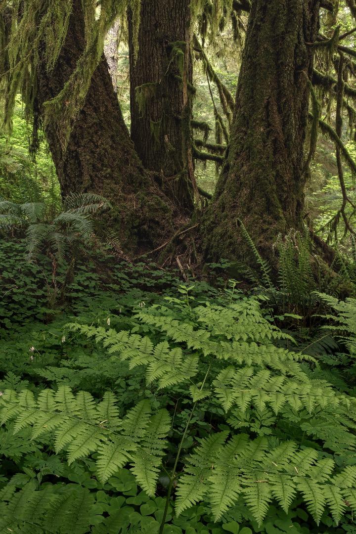 ForestService-4copy.jpg