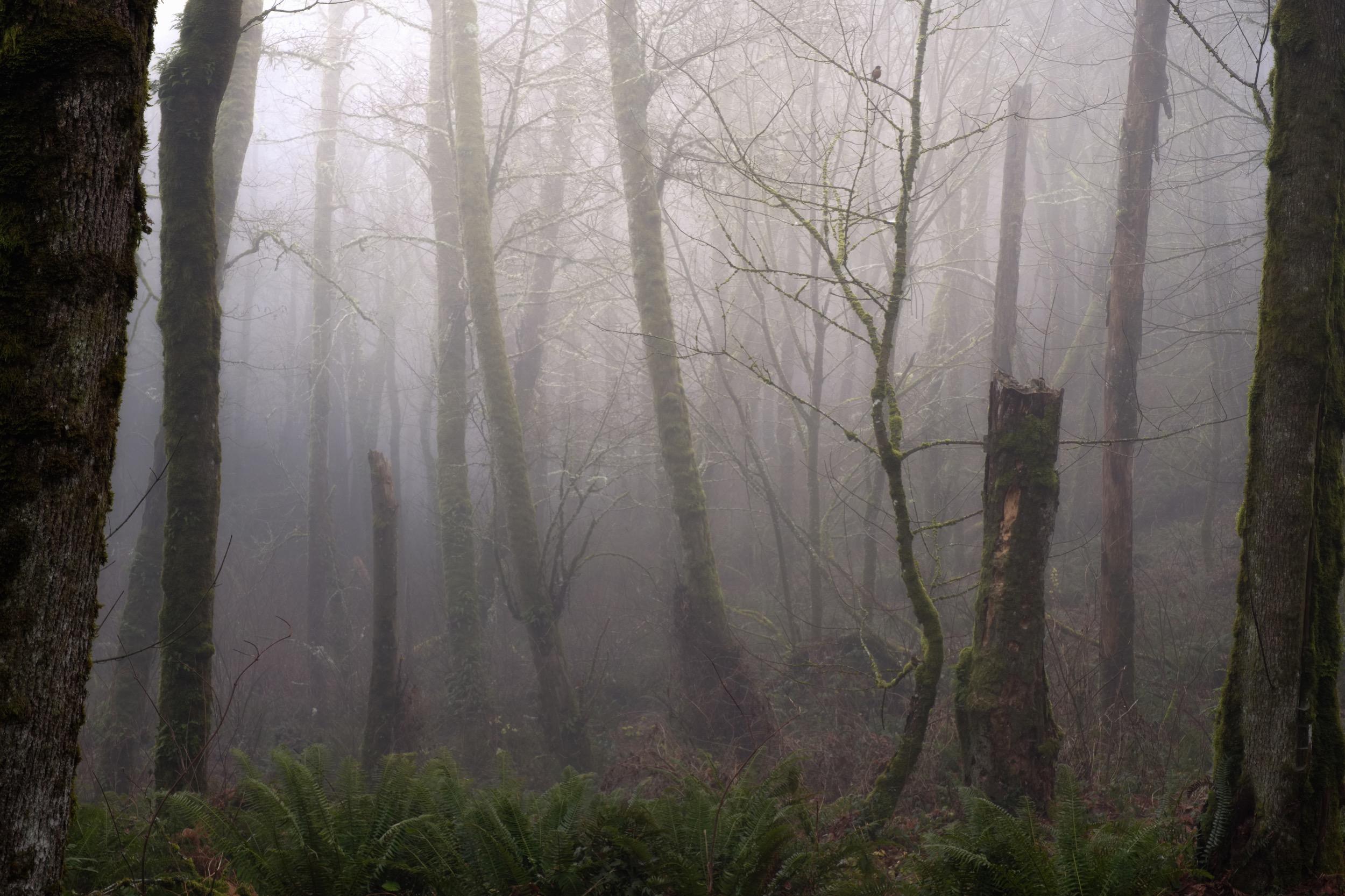InsidetheForestOnline-2.jpg
