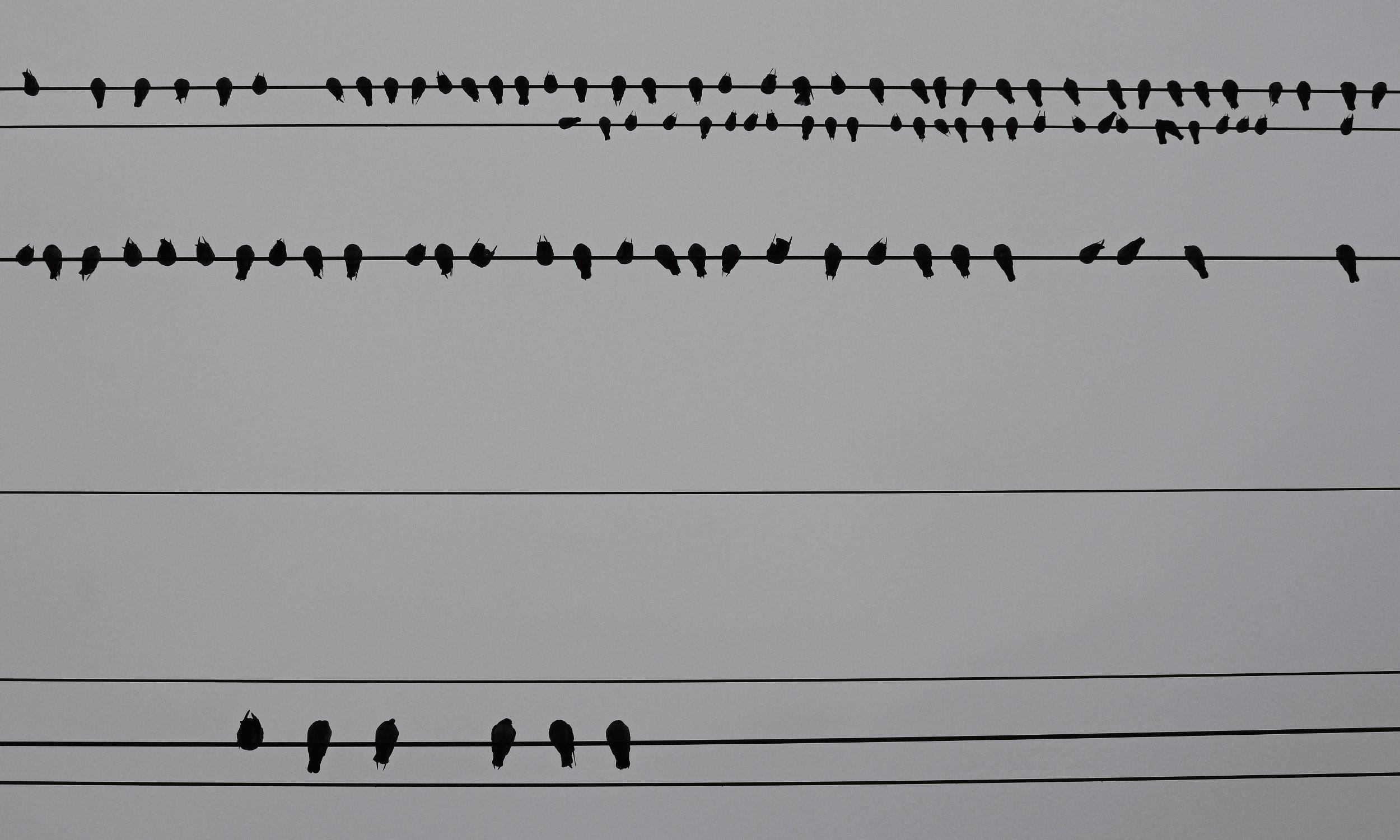 birdsonawire1.jpg
