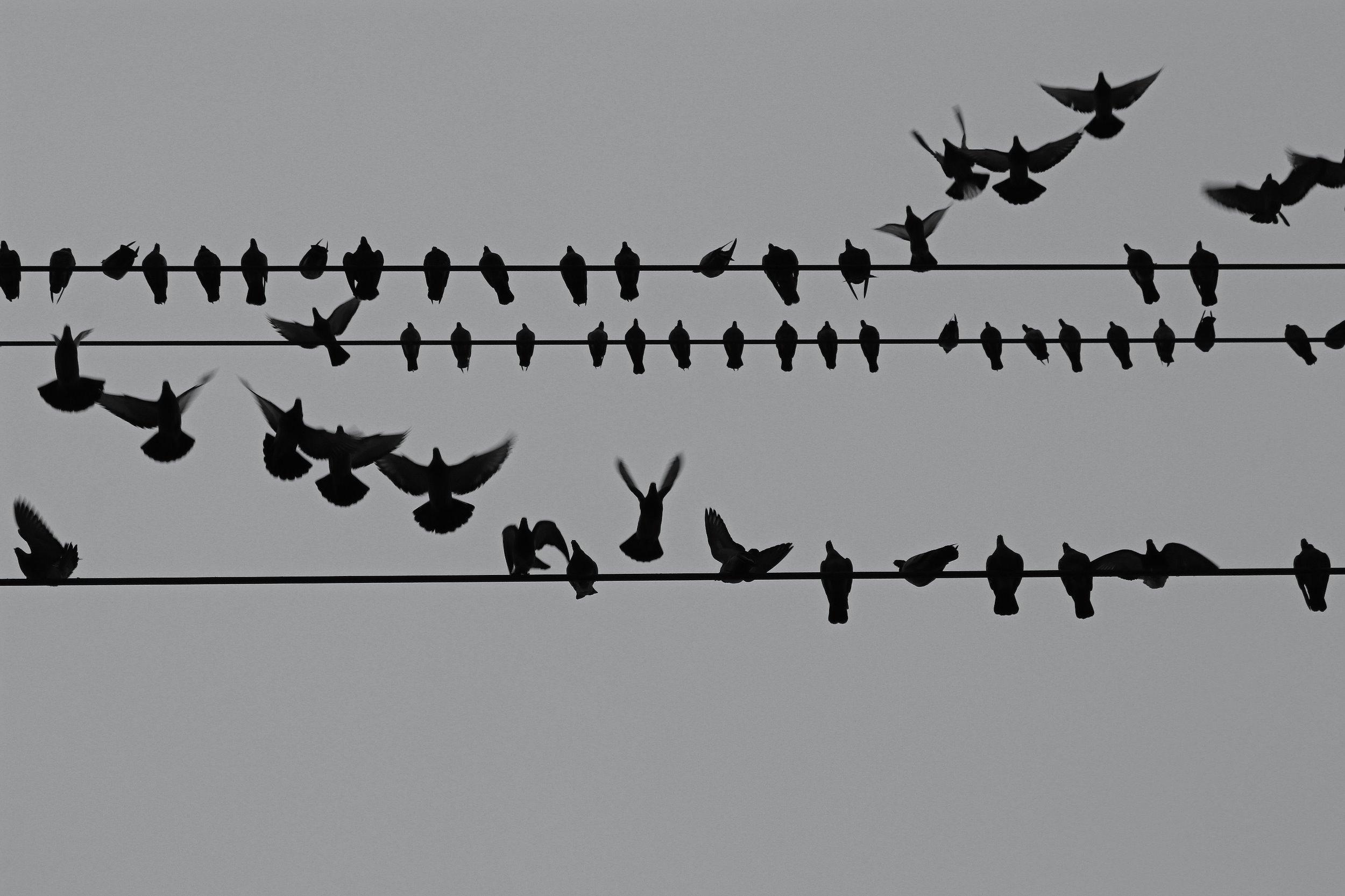 birdsonawire2.jpg