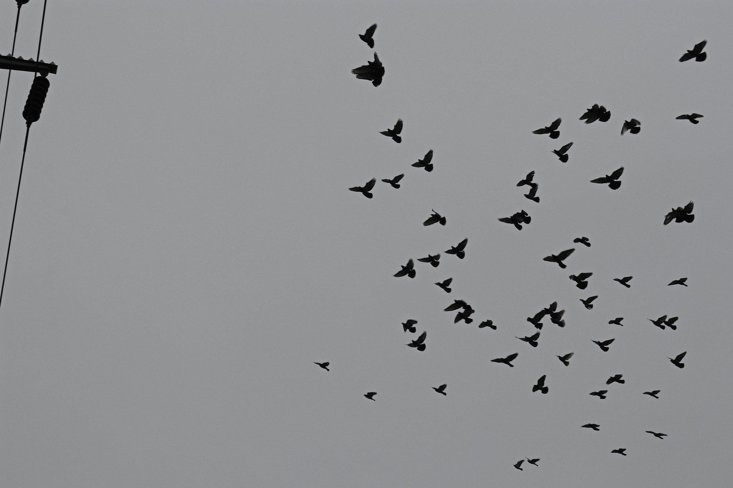 birdsonawire3.jpg