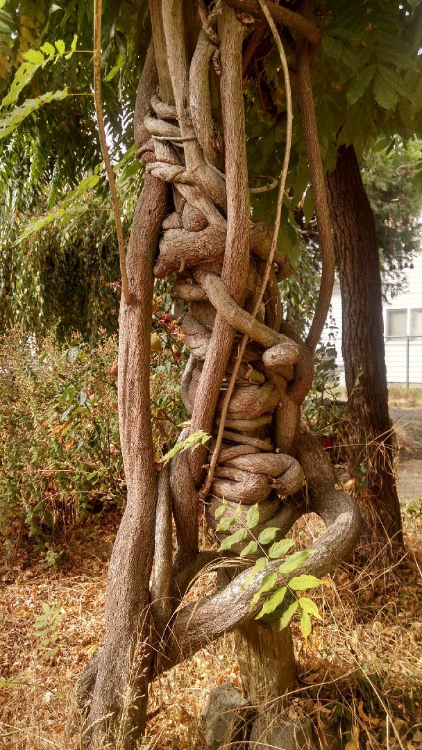 branchwrap.jpg
