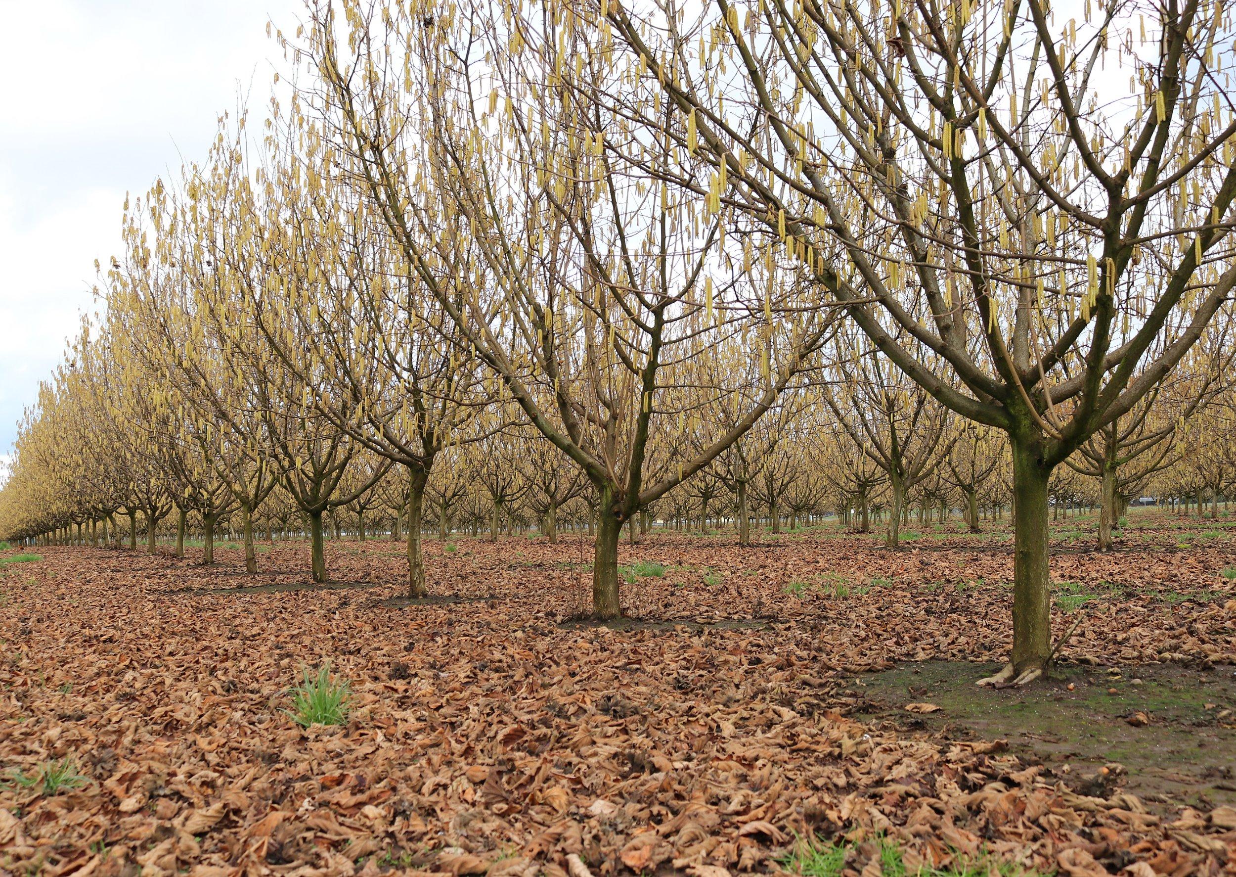 orchard3.jpg