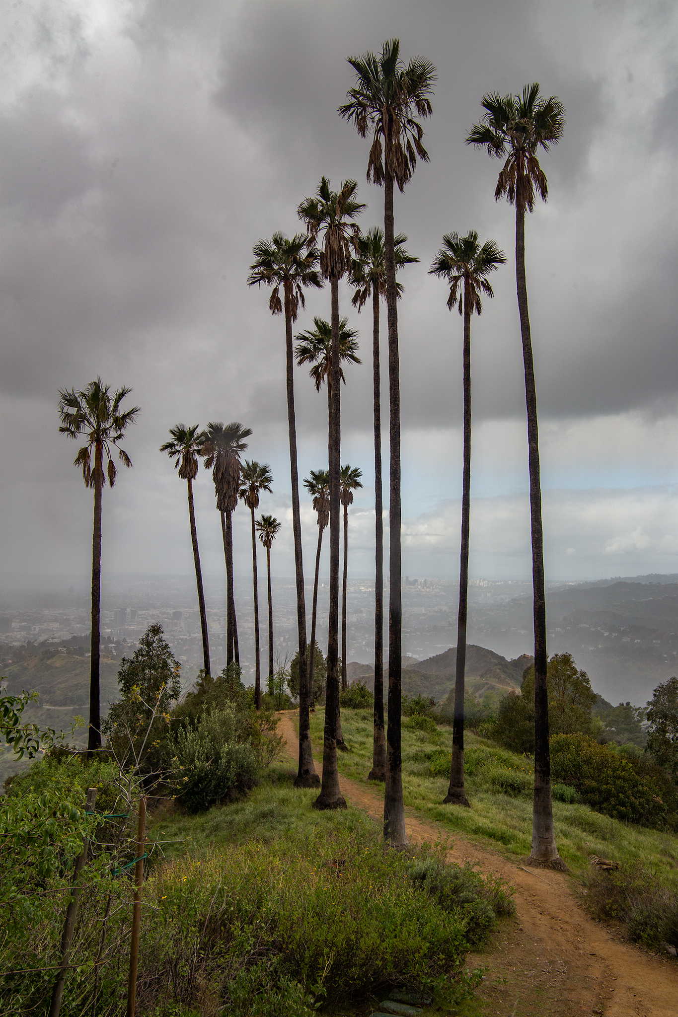 Palm-path.jpg