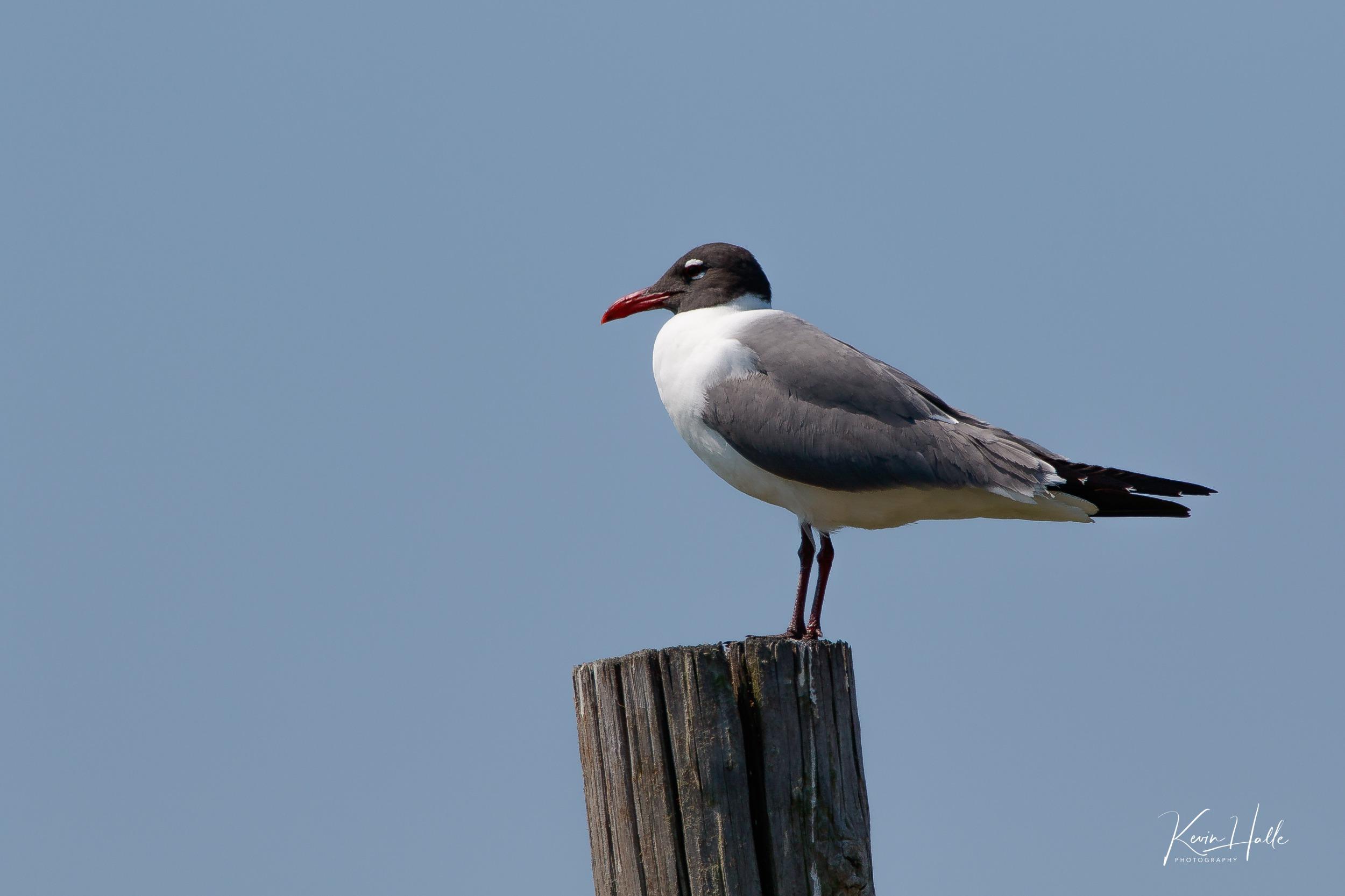 A Few Birds from Jekyll Island Ga  - Photography Forum