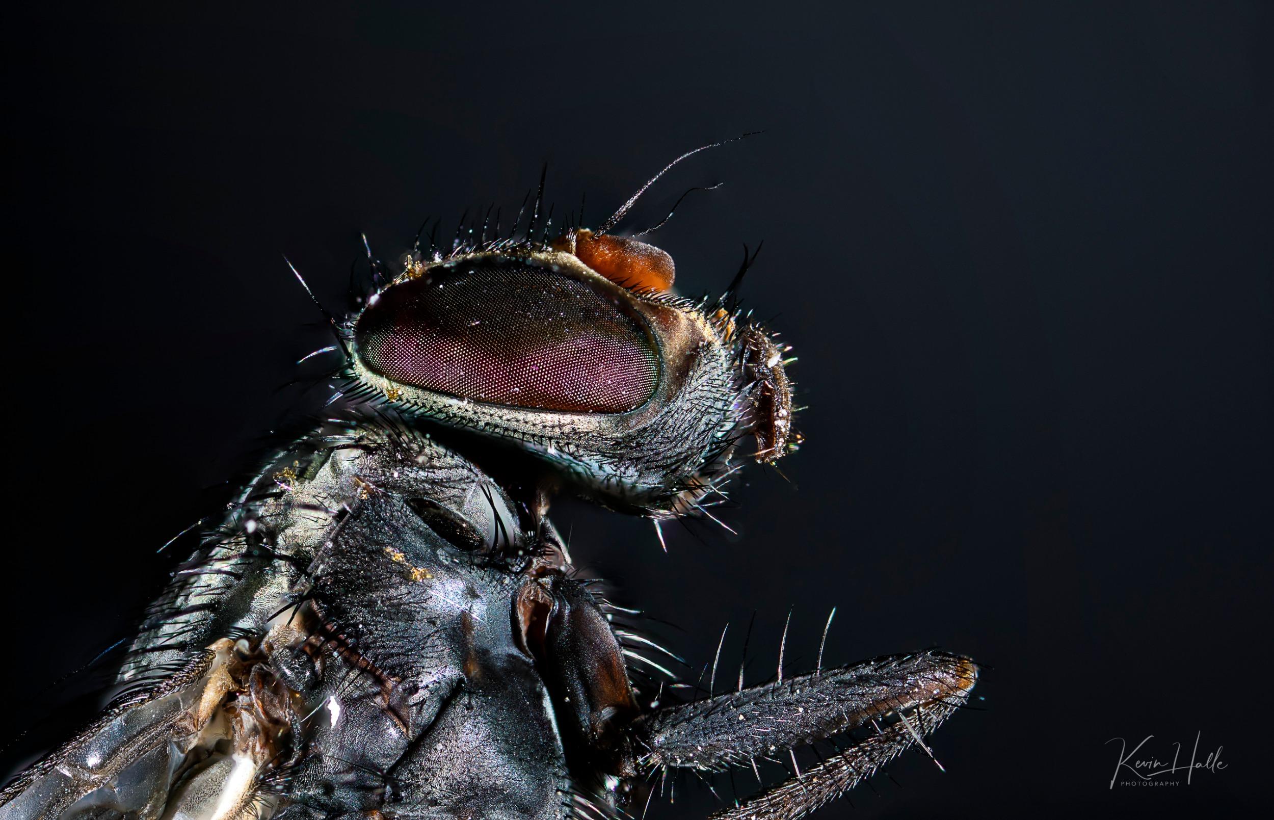 blackfly-1.jpg