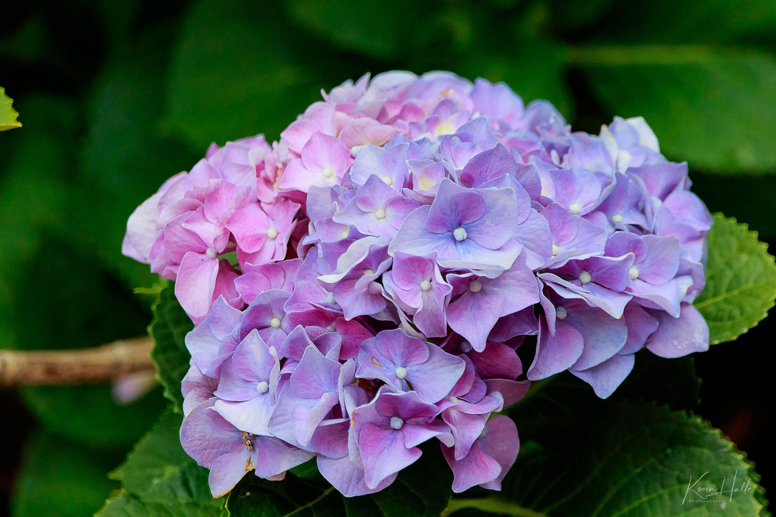 flowerhps-1.jpg