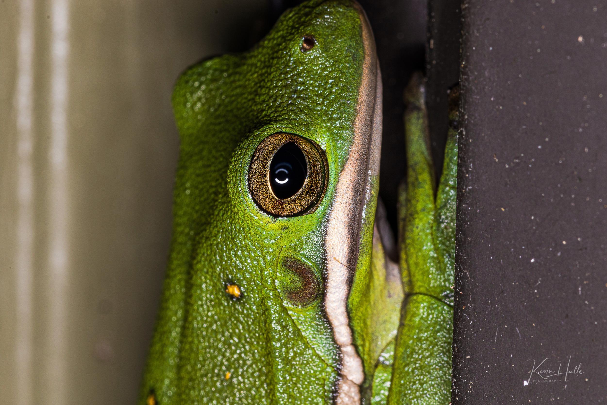 frog1-1.jpg