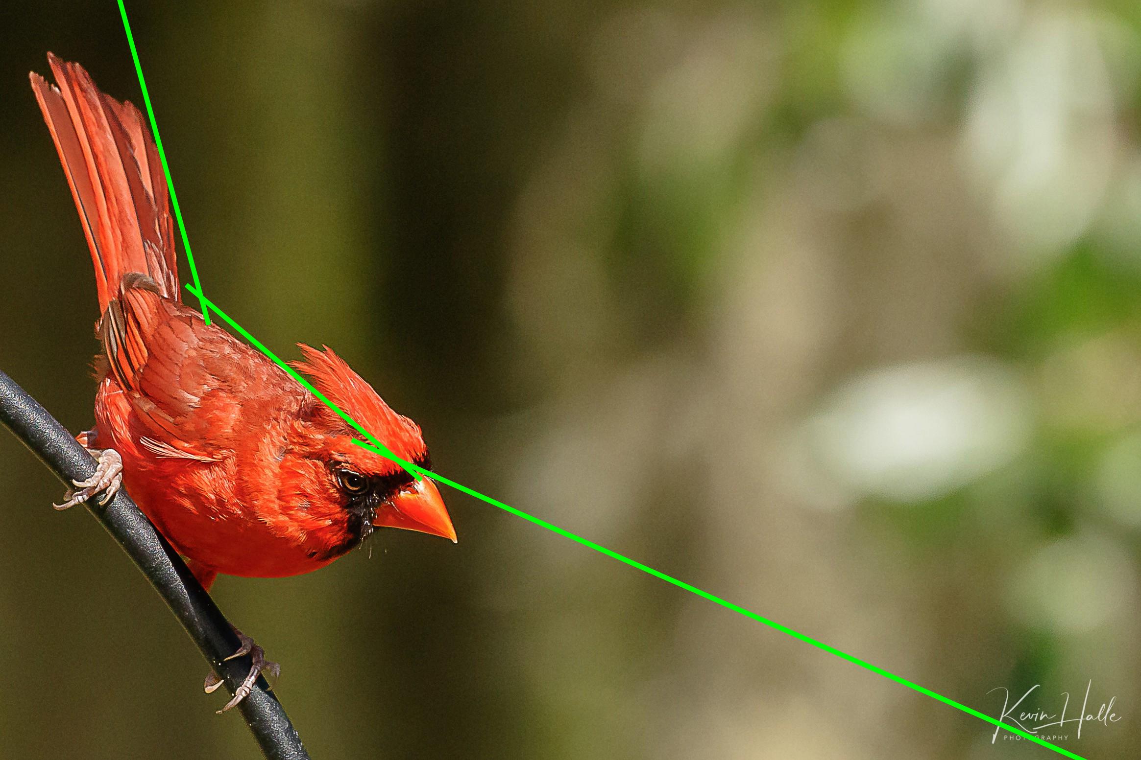 cardinal-diagonal.jpg