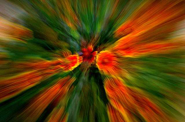 DSC_2041_2010-12-31.jpg