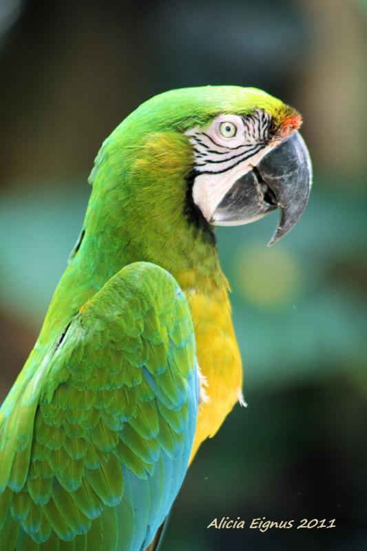 greenparrot1.jpg