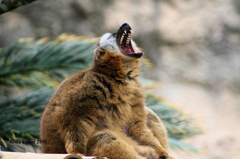 yawn1a.jpg