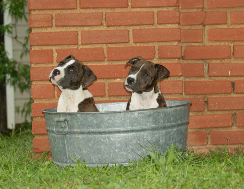 puppies051.JPG
