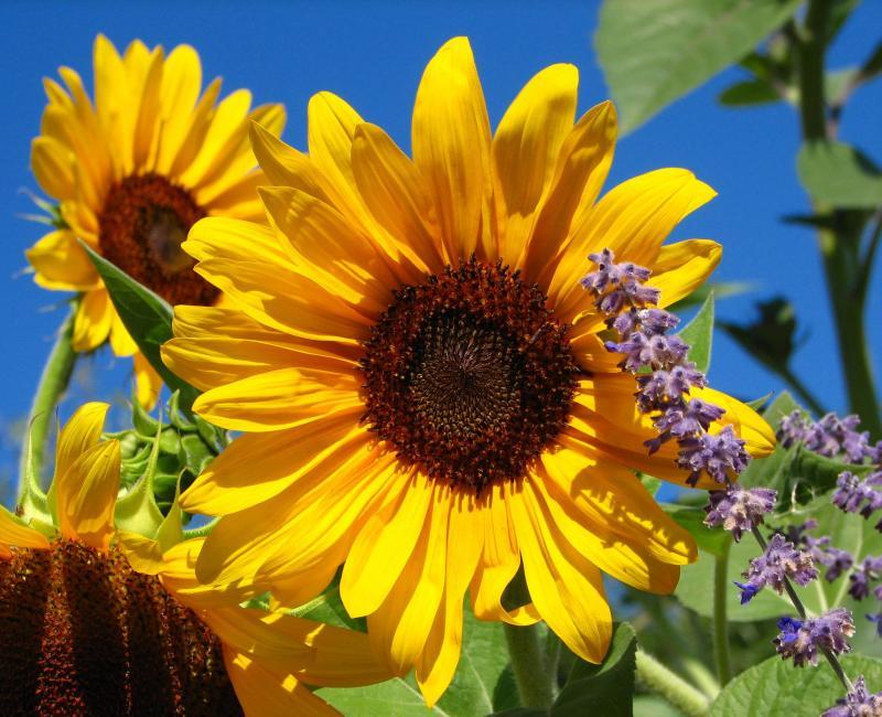 IMG_0074-1_2011-09-05.jpg