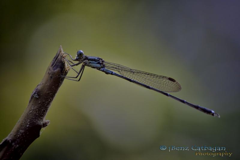 attempt at Macro   DRAGONFLY - Photography Forum