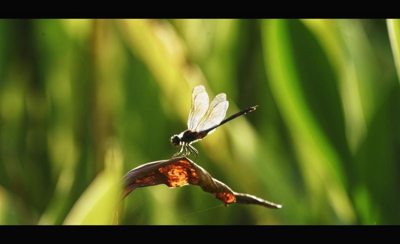 Dragonfly at sunset - Photography Forum