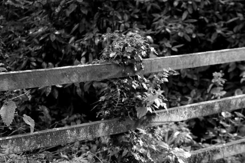 Portreath139bw.jpg
