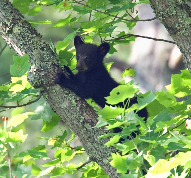 bear_cub_fb.jpg