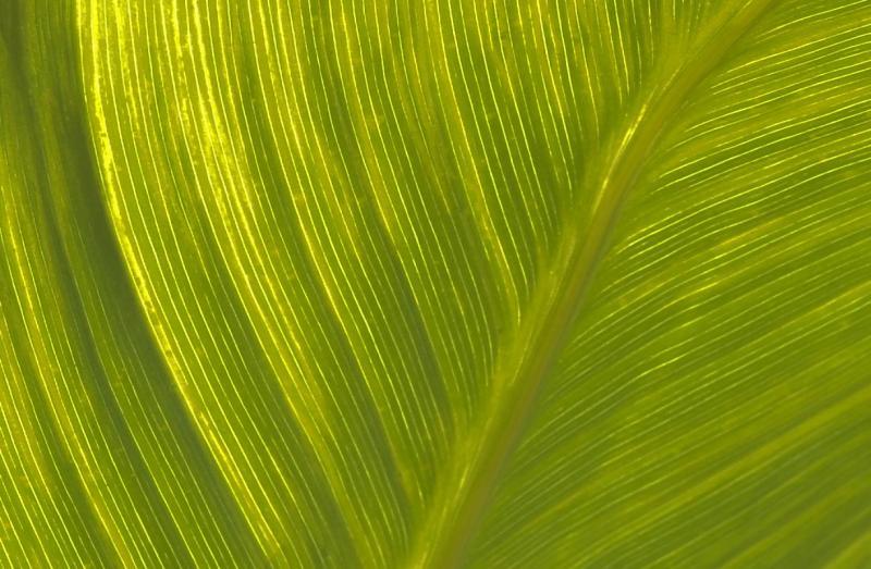 PlantLeaf.jpg