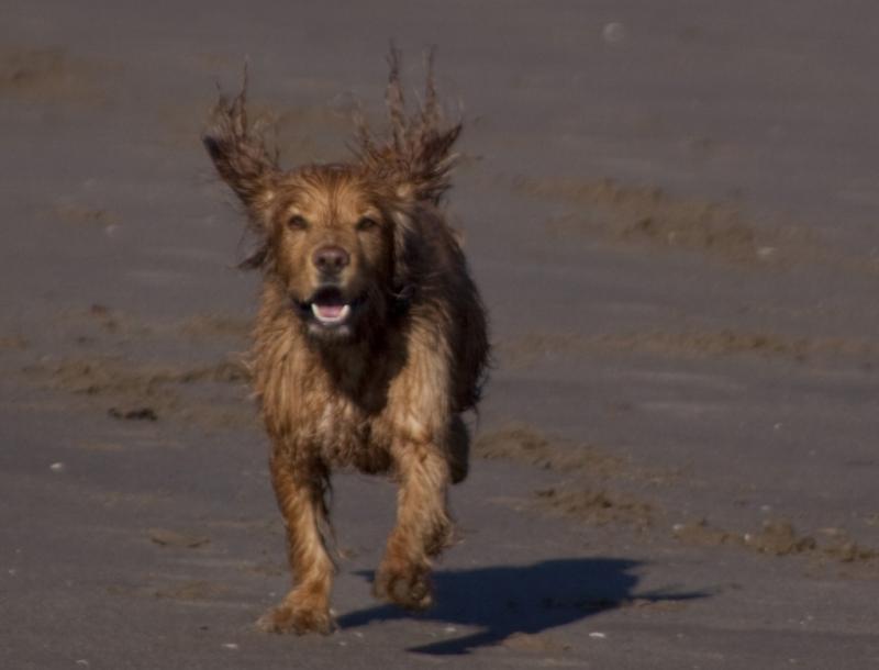 runningdogsmall.jpg