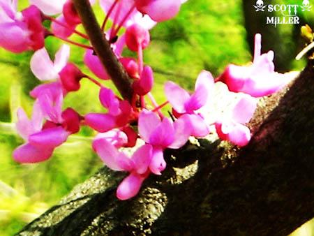 DSCN1703_2011-04-20.jpg